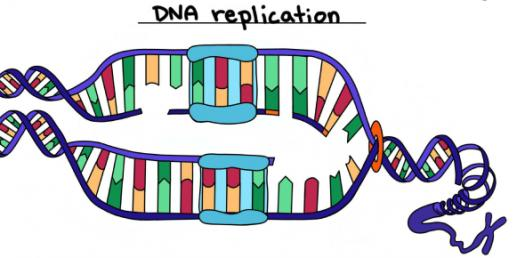 How Well You Know About DNA Replication? Trivia Quiz