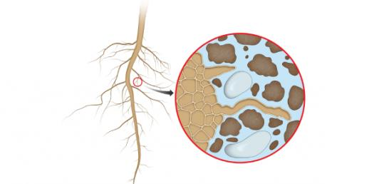 Take The 10th Grade Biology Quiz On Absorption By Roots