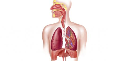 Take The Respiratory System Trivia Quiz!