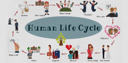 The Human Body And Life Cycle Quiz! Trivia Questions