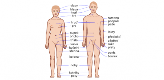 Health Quiz On Body Parts! Trivia Questions