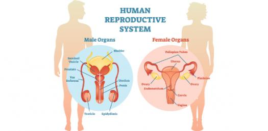 A Quiz On Reproductive Physiology
