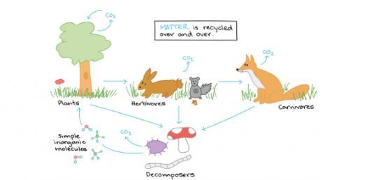 Quiz: Take The Practice Test On Ecosystem!