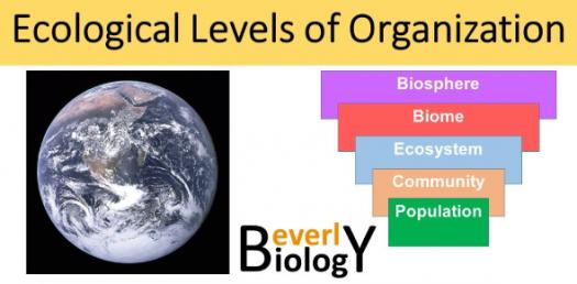 Quiz: Questions On Levels Of Ecology!