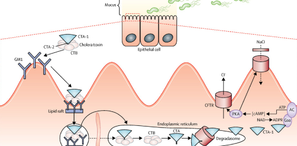 Microbiology- Cell Membranes And Cholera Quiz