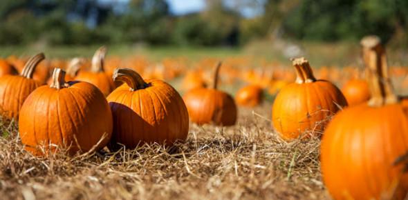 Pumpkin Patch Pre-sales: Quiz!