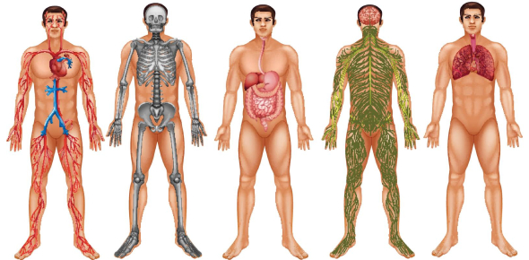 This Is The Most In-depth Biology Quiz About Human Body