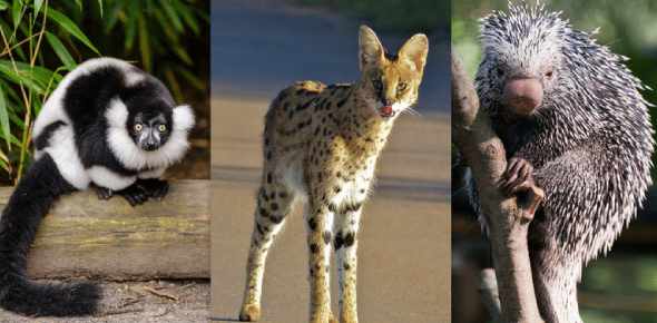 What Do You Know About Rare And Exquisite Animals? Animal Quiz