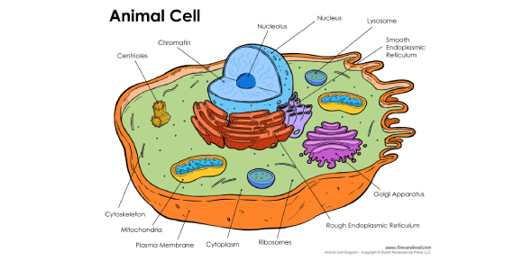 Animal Cell Part Labeling Quiz Questions!