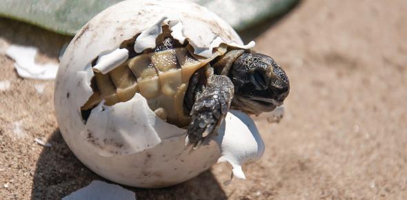 Lifespan Of Pet Animals! Trivia Facts Quiz