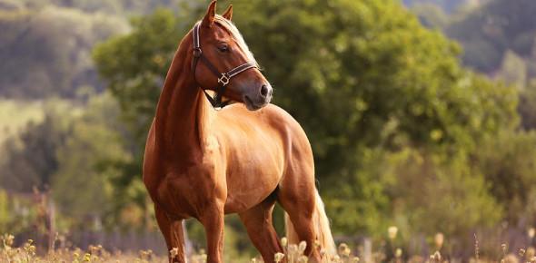 Interesting Horse Trivia Quiz!