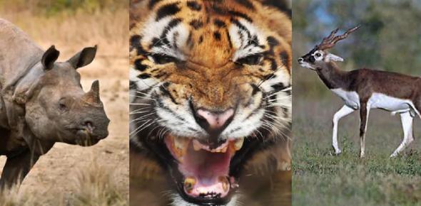 Quiz Of Endangered Animals