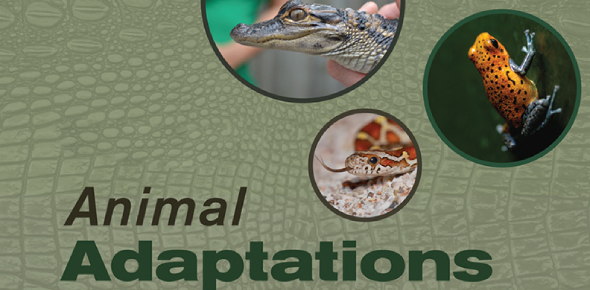 Quiz: Everything About Animal Adaptations