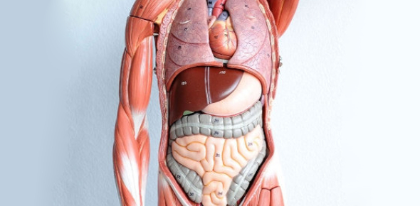 Can You Pass This Hardest Physiology Exam? Trivia Quiz