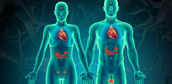 Endocrine System Quiz: How Much Do You Know About Endocrine System?