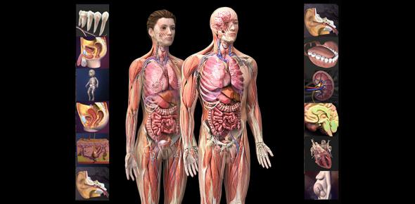 Shoulder: Human Anatomy Quiz! Trivia