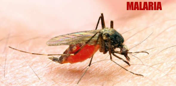 Malaria Test: How Much You Know? Quiz