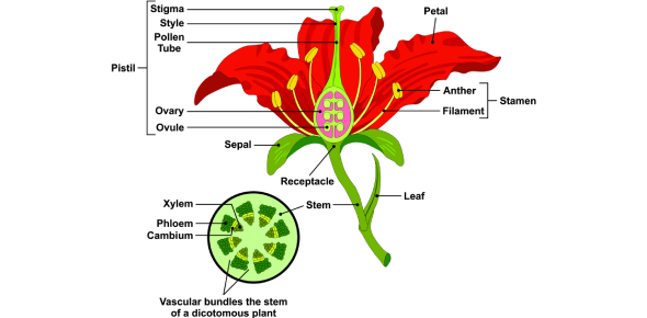 Plant Quiz: Anatomy Of A Flower