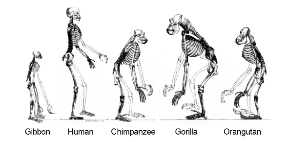 Evidence Of Evolution: Trivia Facts Quiz!