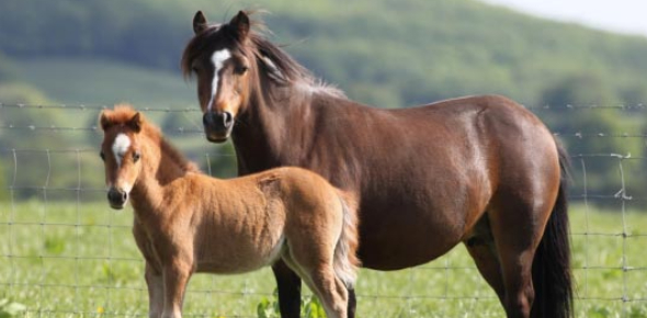 Horse And Pony Trivia Quiz! Test Your Knowledge