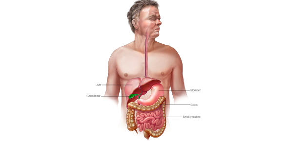A Pharmacology Quiz On Gastrointestinal System!
