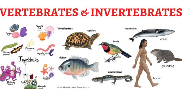 Vertebrates And Invertebrates Questions! Trivia Quiz