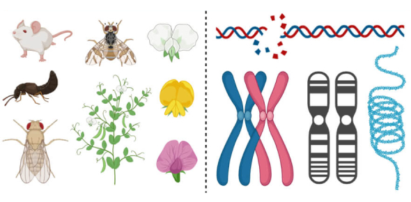 Genotypes And Phenotypes Trivia Quiz!