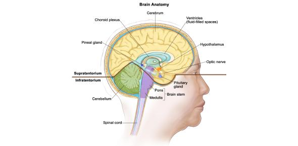 Trivia Quiz On Central Nervous System Tumor!