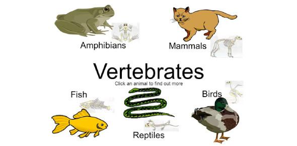 Basic Questions On Vertebrates! Trivia Quiz