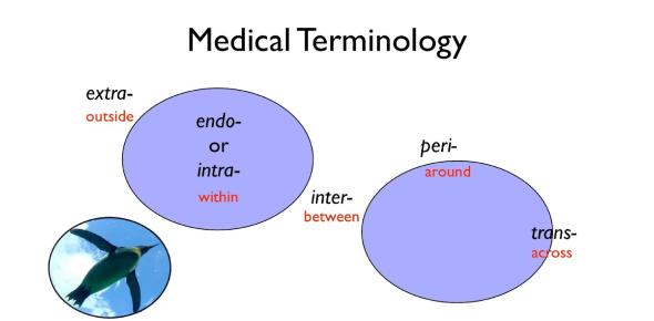 Medical Terminology Trivia Quiz