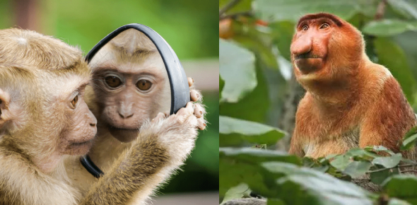 What Type Of Ugly Monkey Are You?