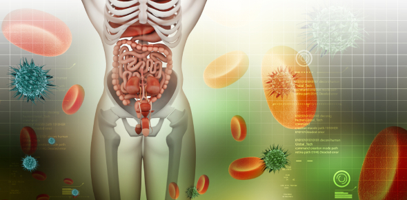 Biology Trivia Questions On Digestive System! Quiz