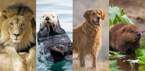 The Smalley Animal Personality Quiz