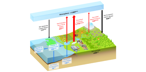 Carbon Cycle Quiz: What Do You Know?