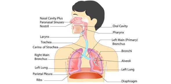 Medical Terminology Quiz: Respiratory System!