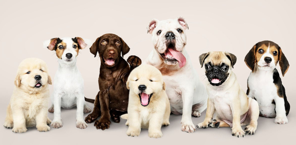 Quiz: What Kind Of Puppy Should You Get?