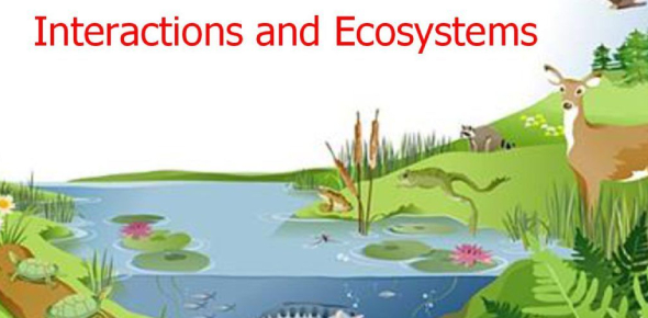 Interactions In Ecosystems Quiz