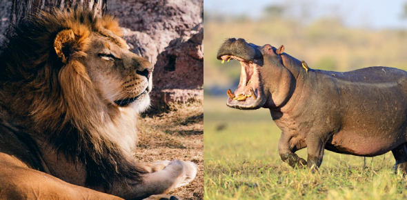 Which Mighty Animal Are You Quiz!