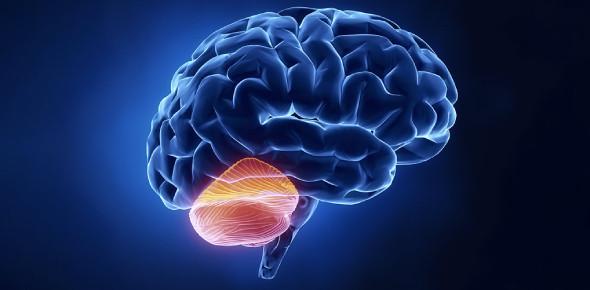 The Ultimate Quiz On Cerebellum