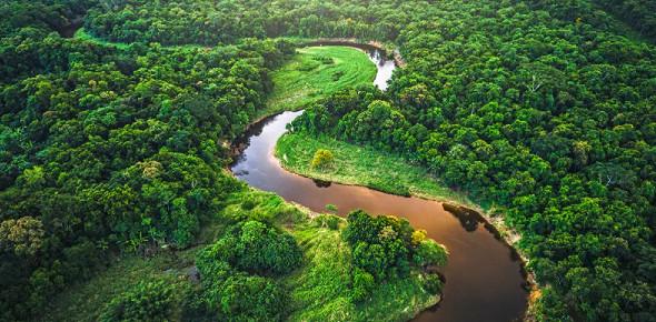 The Rainforest: Multiple Choice Quiz