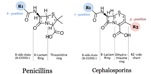 Penicillin And Cephalosporins