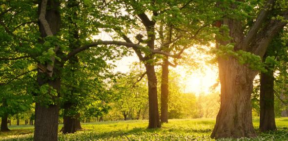 Green Environment Words Trivia Quiz! Test