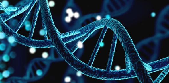 A Simple Biology Quiz On Genetics!
