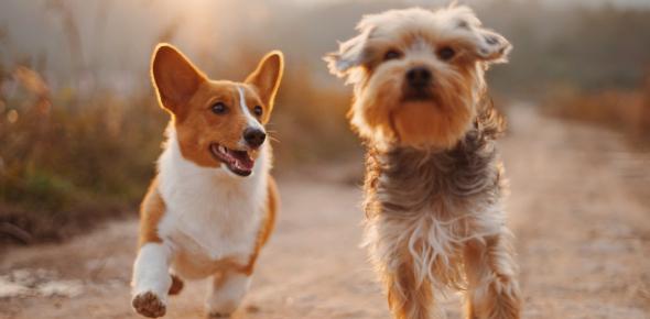 Dog Breed Quiz: Identify If You Can!