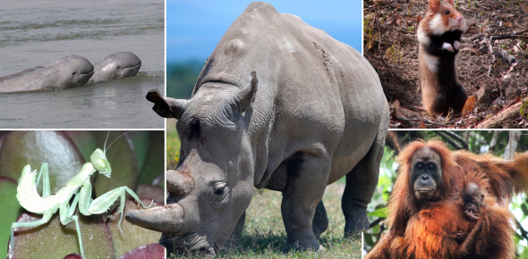Can You Identify These Following Extinct Animals? Quiz
