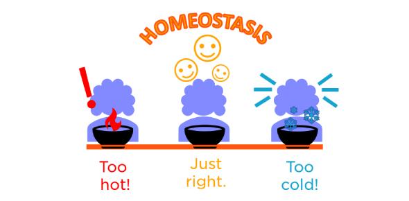 Anatomy & Physiology: Homeostasis