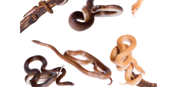 What Type Of Snake Are You?