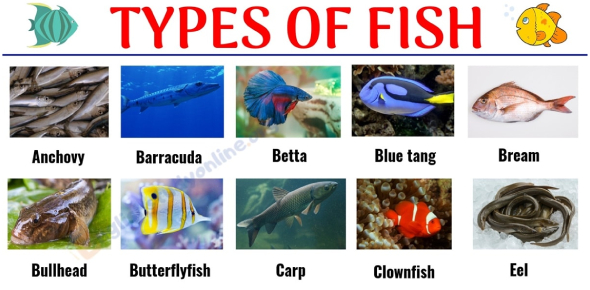 What Type Of Fish Are You?