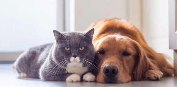 Dog And Cat Trivia