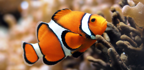 Test Your Knowledge With This Fish Quiz